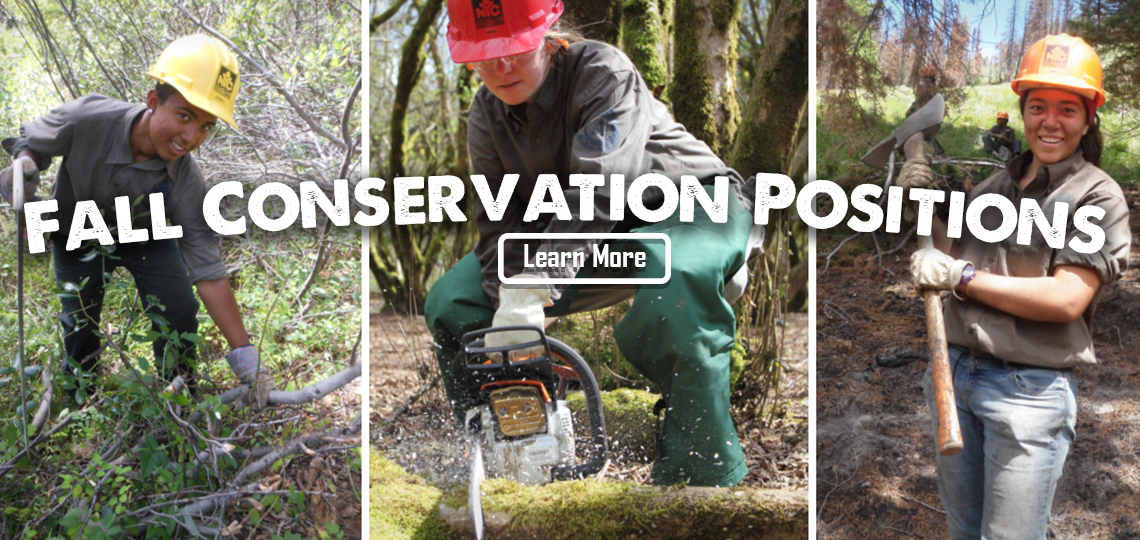 Fall Conservation Crews